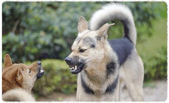 狂犬病予防法について