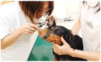 犬・猫の健康診断