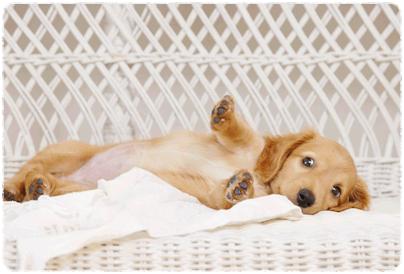 犬の登録について