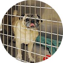 トリミングやペットホテルも、獣医のいる動物病院だから安心。