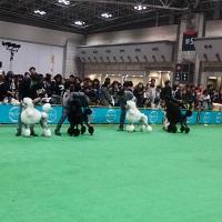 2015-04-05-13-02-44_photo